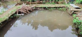 Ternak Ikan Nila – Karya Santri