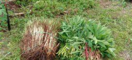 Etos Kerja Kemandirian Santri – Panen sayur
