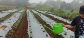Kebun Santri – Perawatan Tanaman
