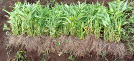 Kebun Santri – Petik Sayur