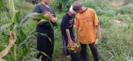 Panen Jagung Hasil Kebun Santri