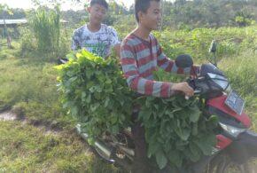 Panen Sayur Kebun Santri