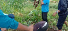 Kemandirian Santri – Berkebun dan Ternak Sapi