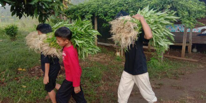 Kami Siap Mandiri – Panen Sayur Kangkung